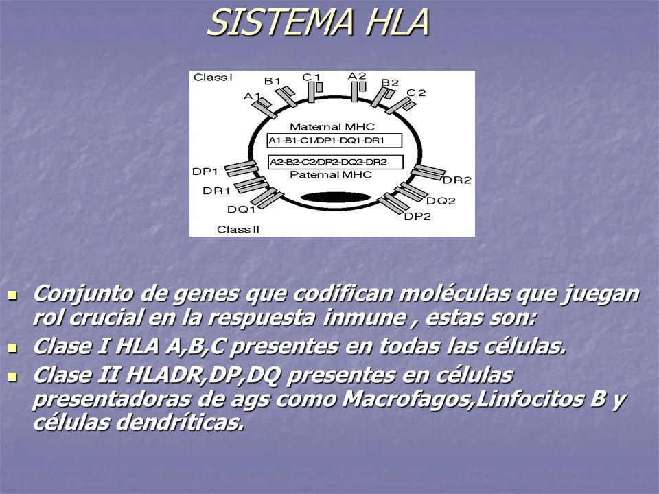 SISTEMA HLA Conjunto de genes que codifican moléculas que juegan rol crucial en la respuesta inmune , estas son: