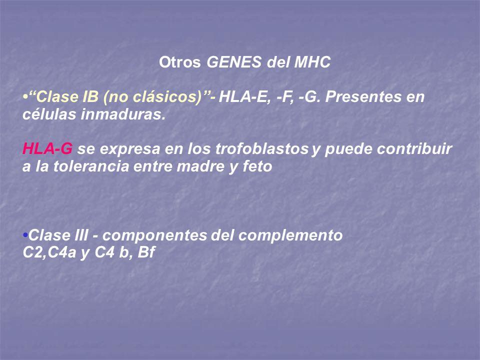 Otros GENES del MHC• Clase IB (no clásicos) - HLA-E, -F, -G. Presentes en células inmaduras.