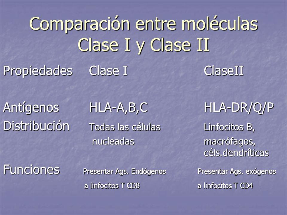 Comparación entre moléculas Clase I y Clase II