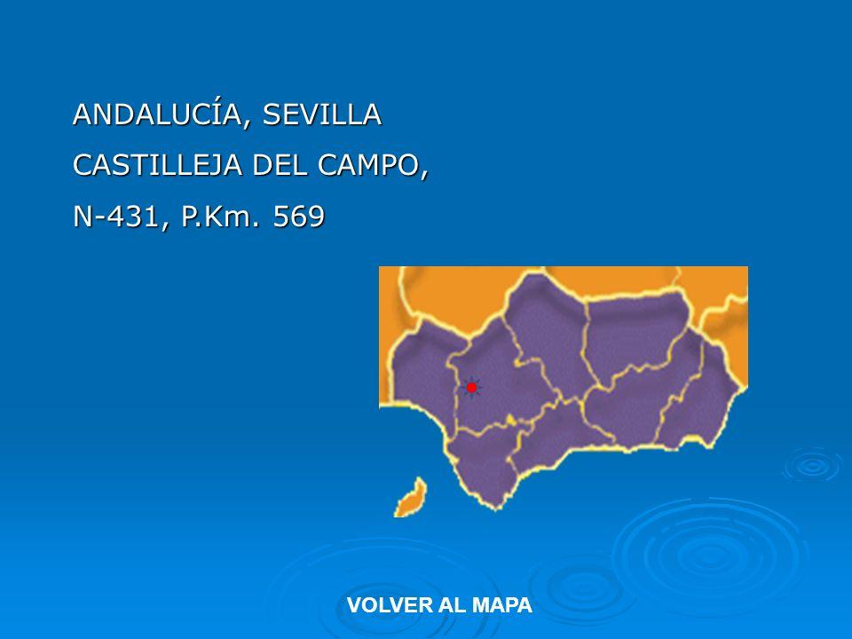 ANDALUCÍA, SEVILLA CASTILLEJA DEL CAMPO, N-431, P.Km. 569