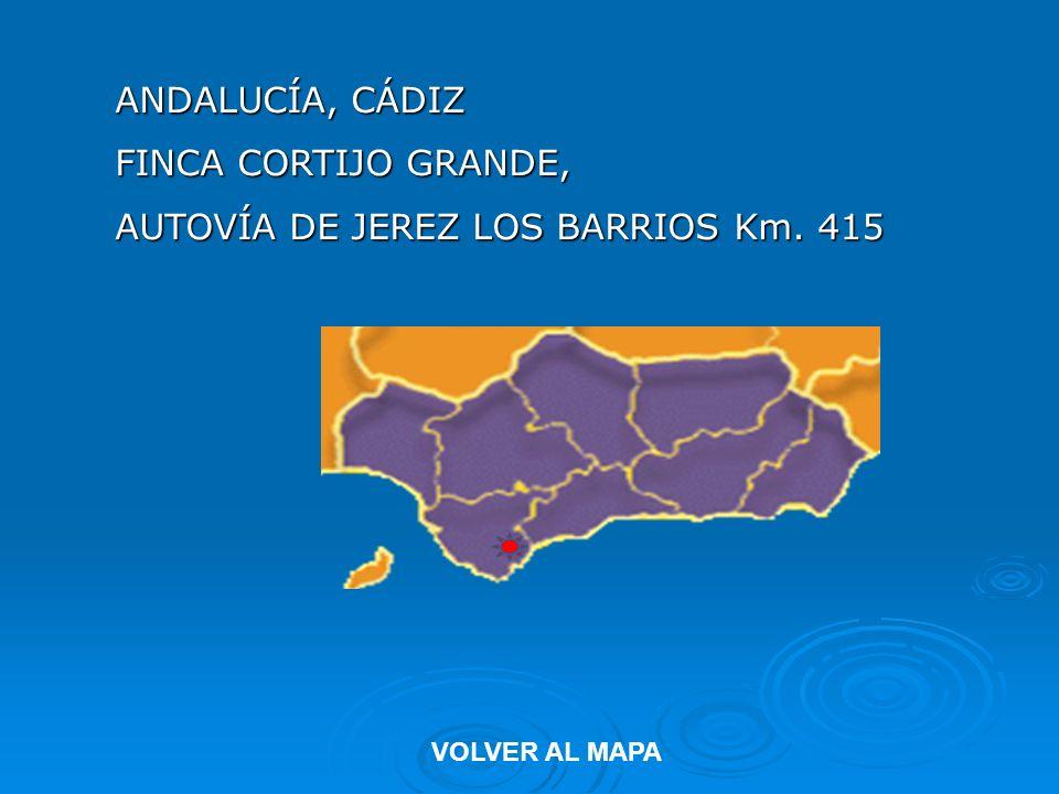 AUTOVÍA DE JEREZ LOS BARRIOS Km. 415