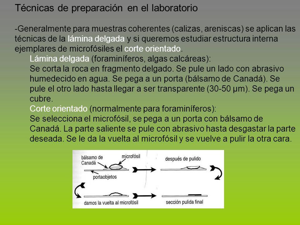 Técnicas de preparación en el laboratorio