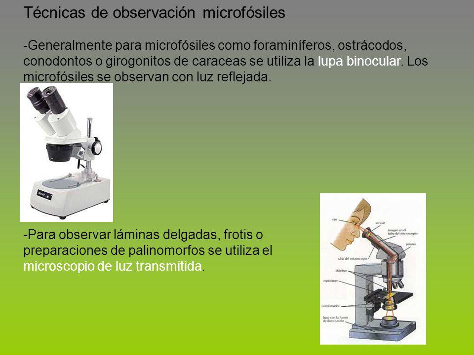Técnicas de observación microfósiles