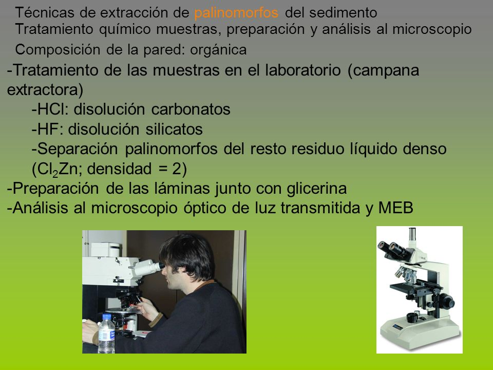 Tratamiento de las muestras en el laboratorio (campana extractora)