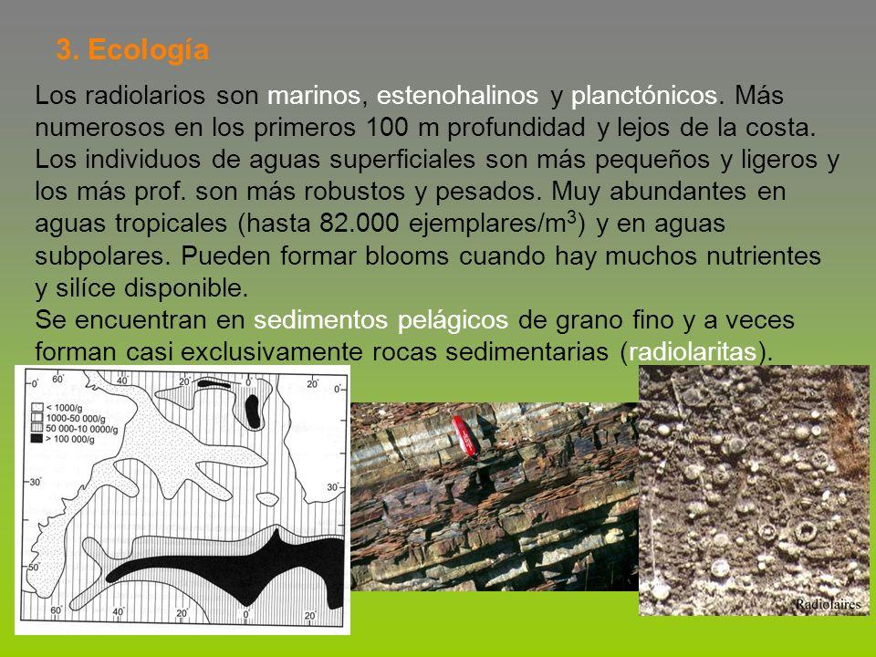 3. Ecología Los radiolarios son marinos, estenohalinos y planctónicos. Más. numerosos en los primeros 100 m profundidad y lejos de la costa.