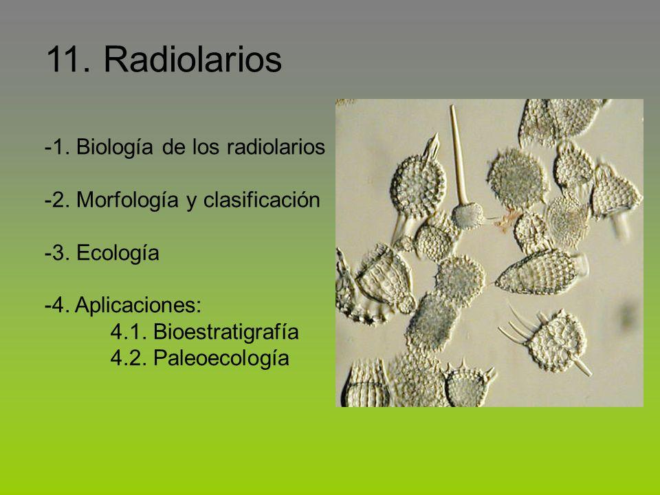 11. Radiolarios -1. Biología de los radiolarios