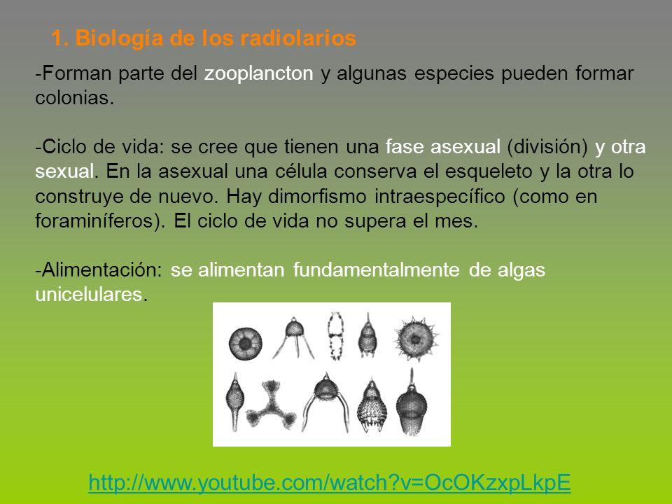 1. Biología de los radiolarios