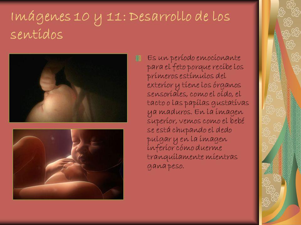Imágenes 10 y 11: Desarrollo de los sentidos
