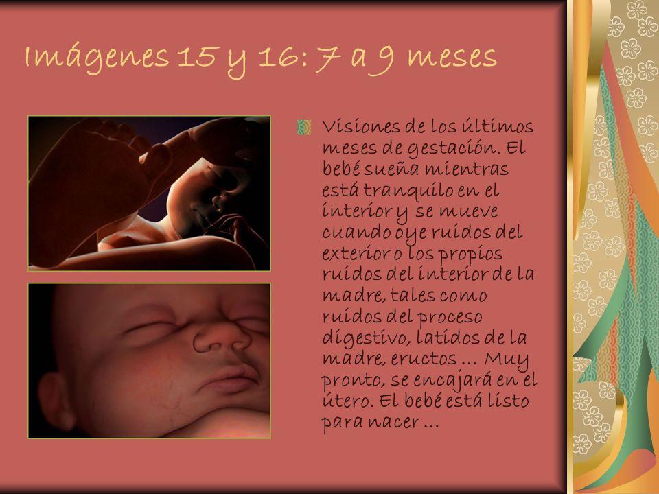Imágenes 15 y 16: 7 a 9 meses