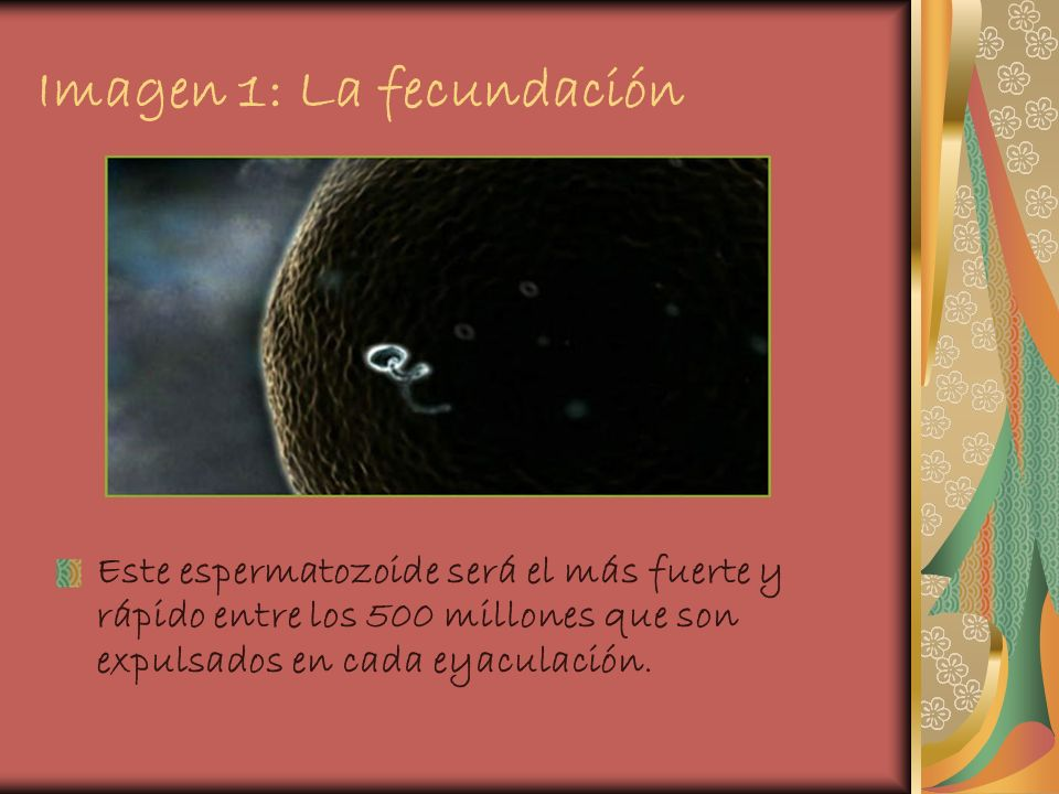 Imagen 1: La fecundación