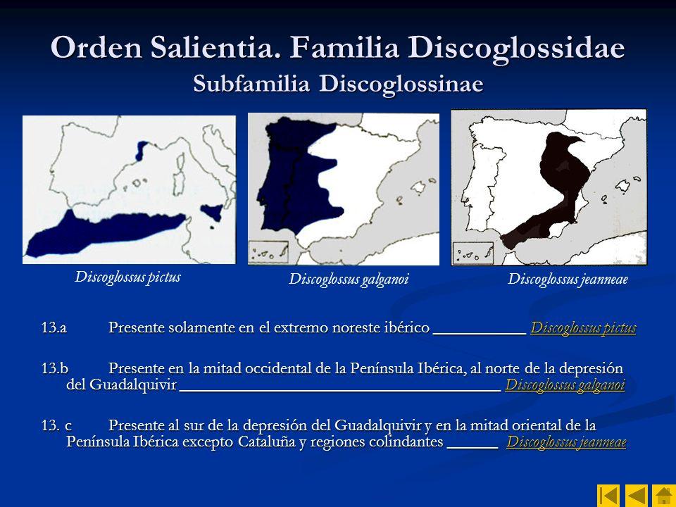 Orden Salientia. Familia Discoglossidae Subfamilia Discoglossinae