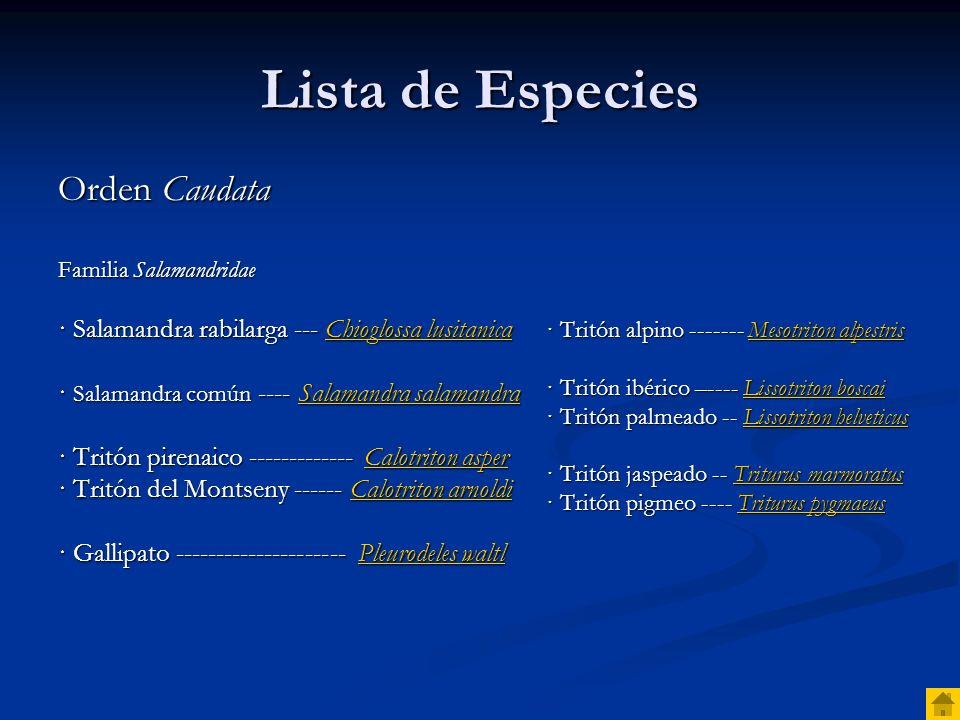 Lista de Especies Orden Caudata