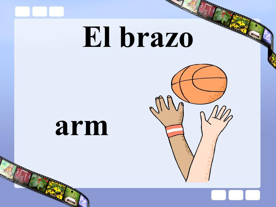 El brazo arm