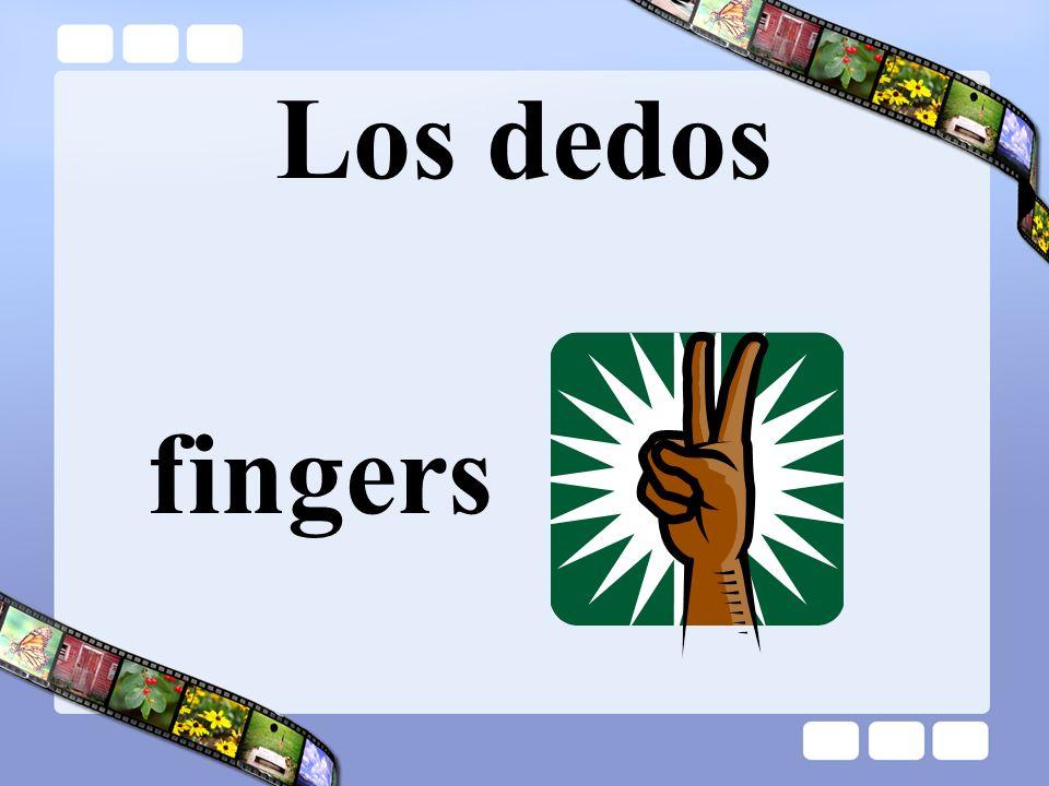 Los dedos fingers