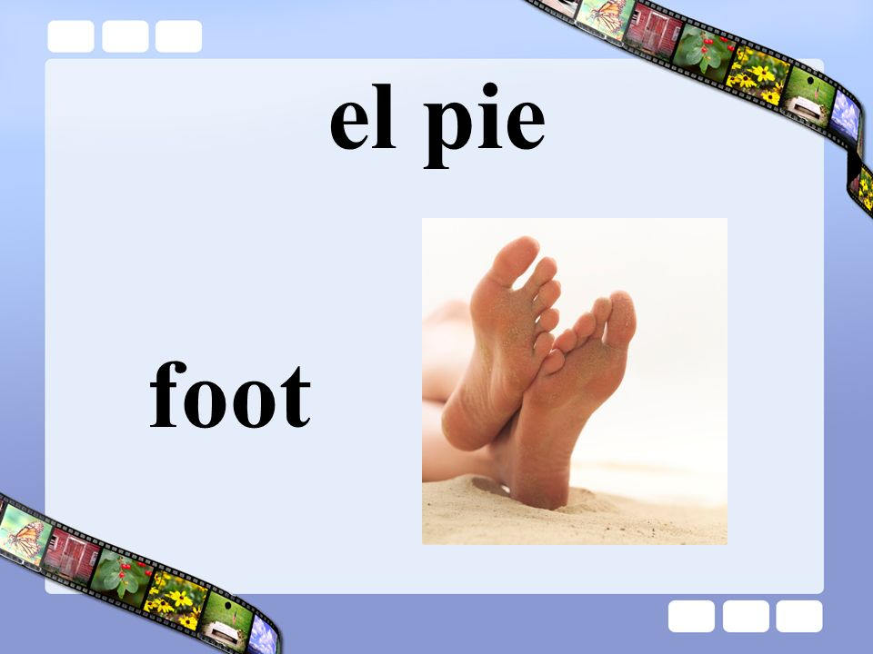 el pie foot