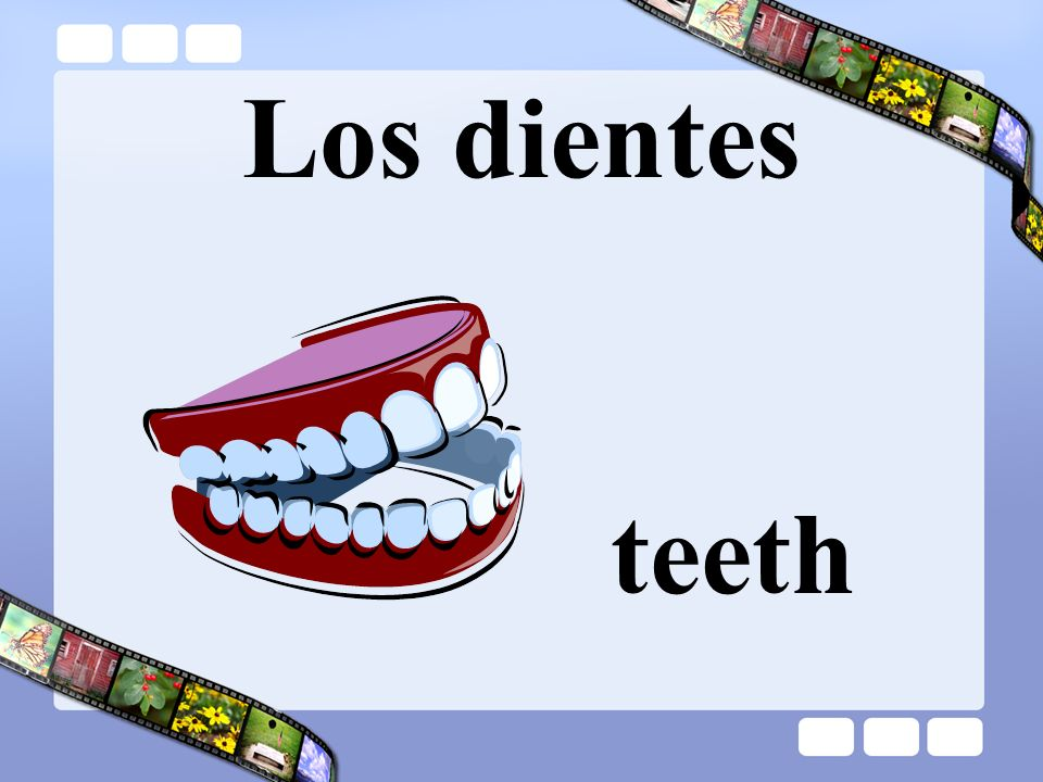 Los dientes teeth