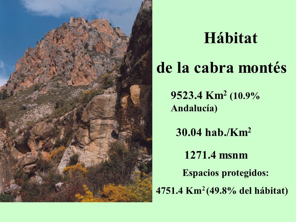 Hábitat de la cabra montés 9523.4 Km2 (10.9% Andalucía) 30.04 hab./Km2