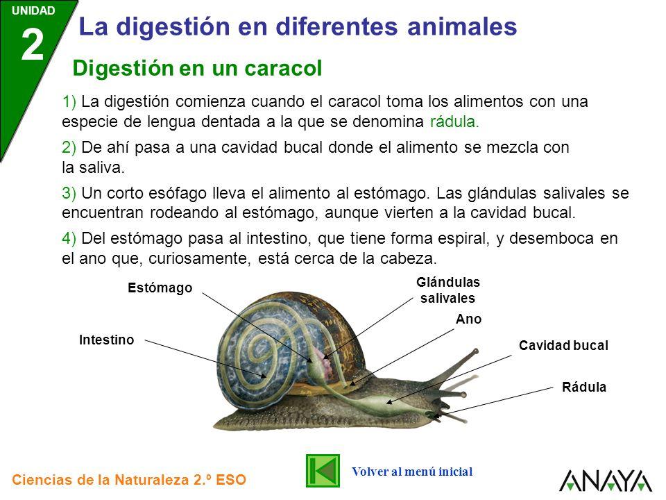 La digestión en diferentes animales