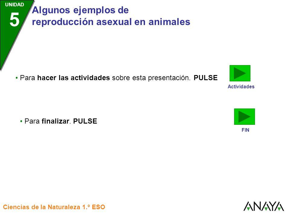 • Para hacer las actividades sobre esta presentación. PULSE