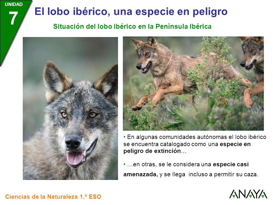 Situación del lobo ibérico en la Península Ibérica