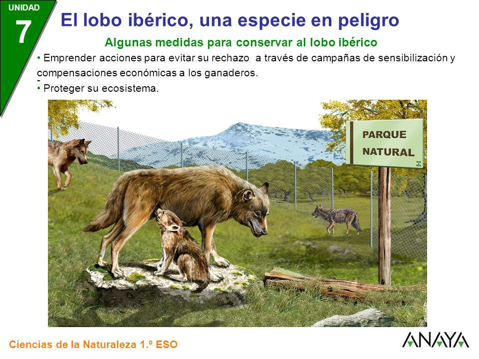 Algunas medidas para conservar al lobo ibérico