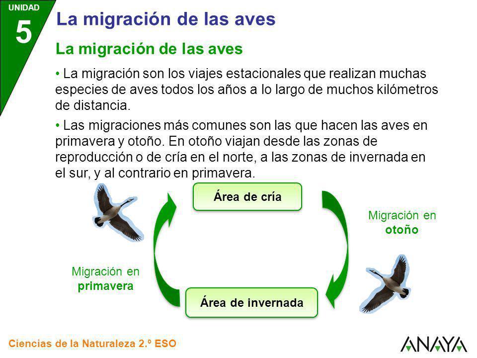 Migración en primavera