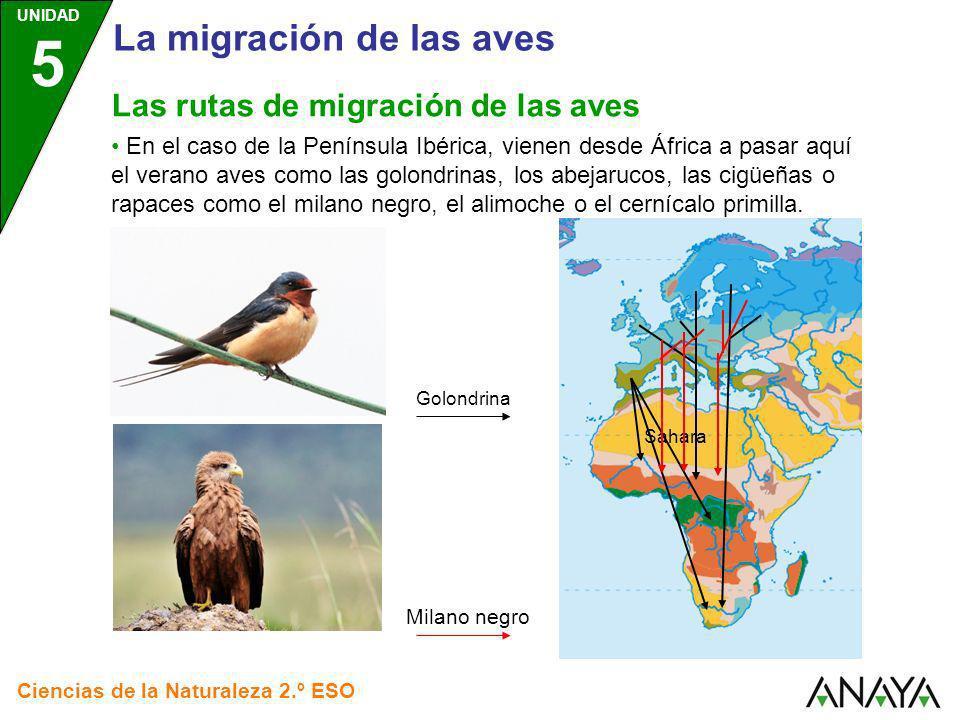La migración de las aves