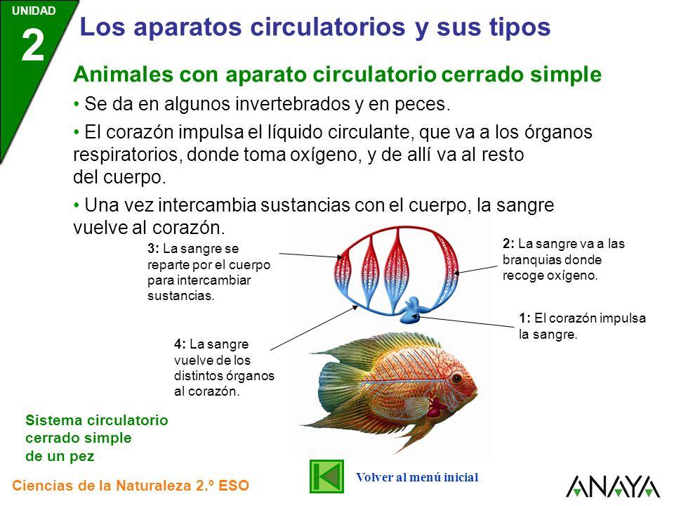 Los aparatos circulatorios y sus tipos