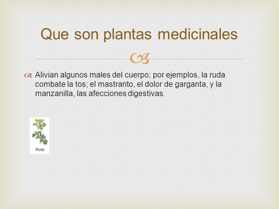 Reino vegetal por sugeidy ppt descargar for Que son la plantas ornamentales