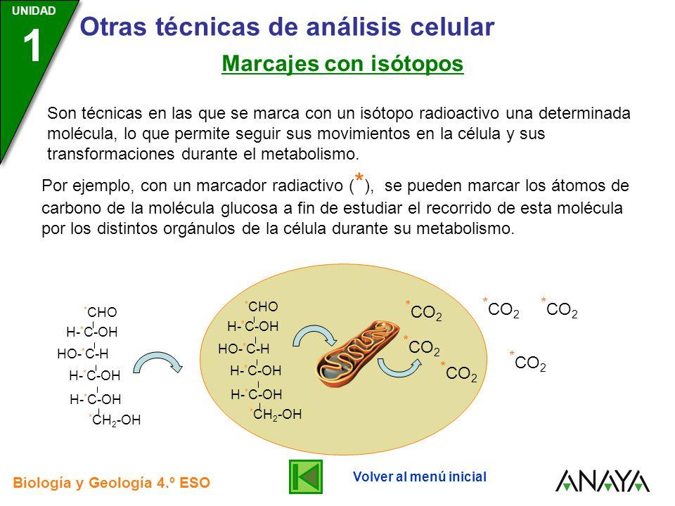 Marcajes con isótopos *CO2 *CO2