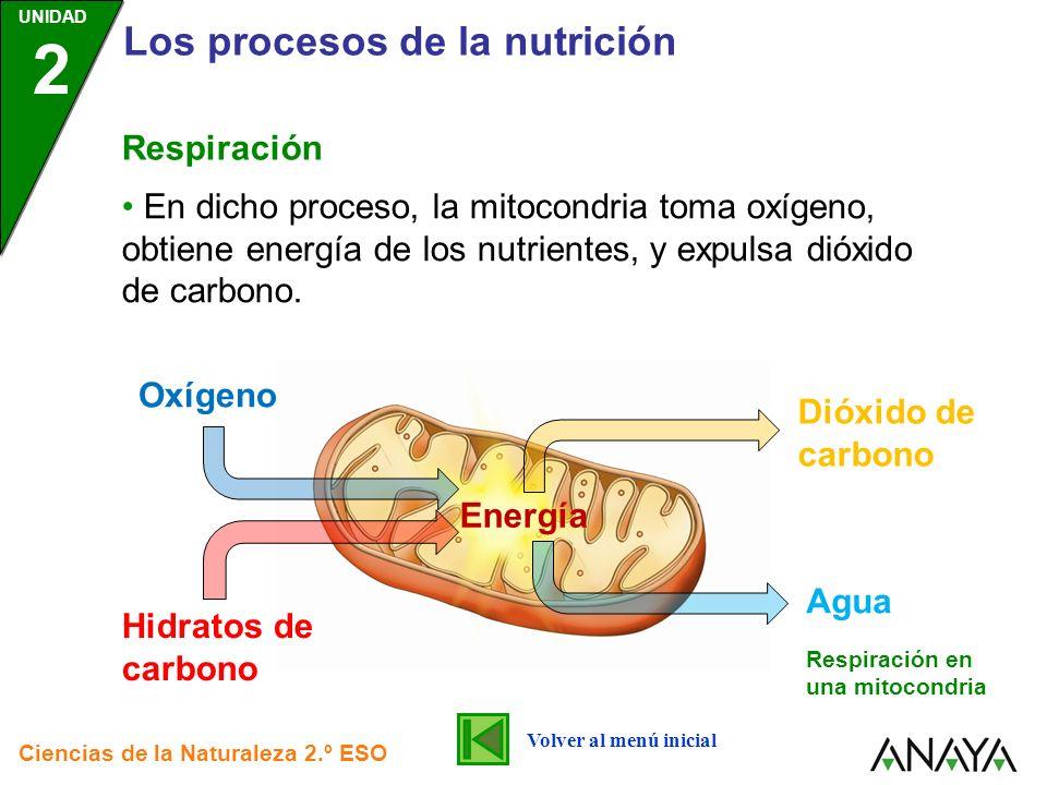 Los procesos de la nutrición
