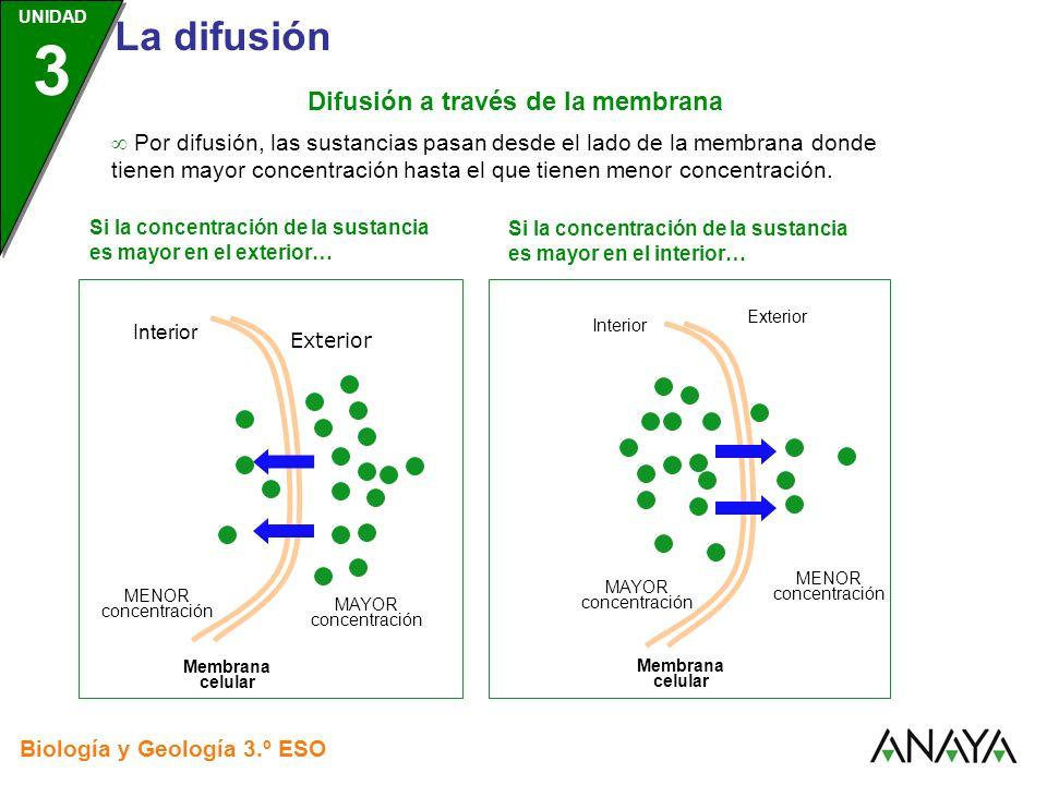 Difusión a través de la membrana