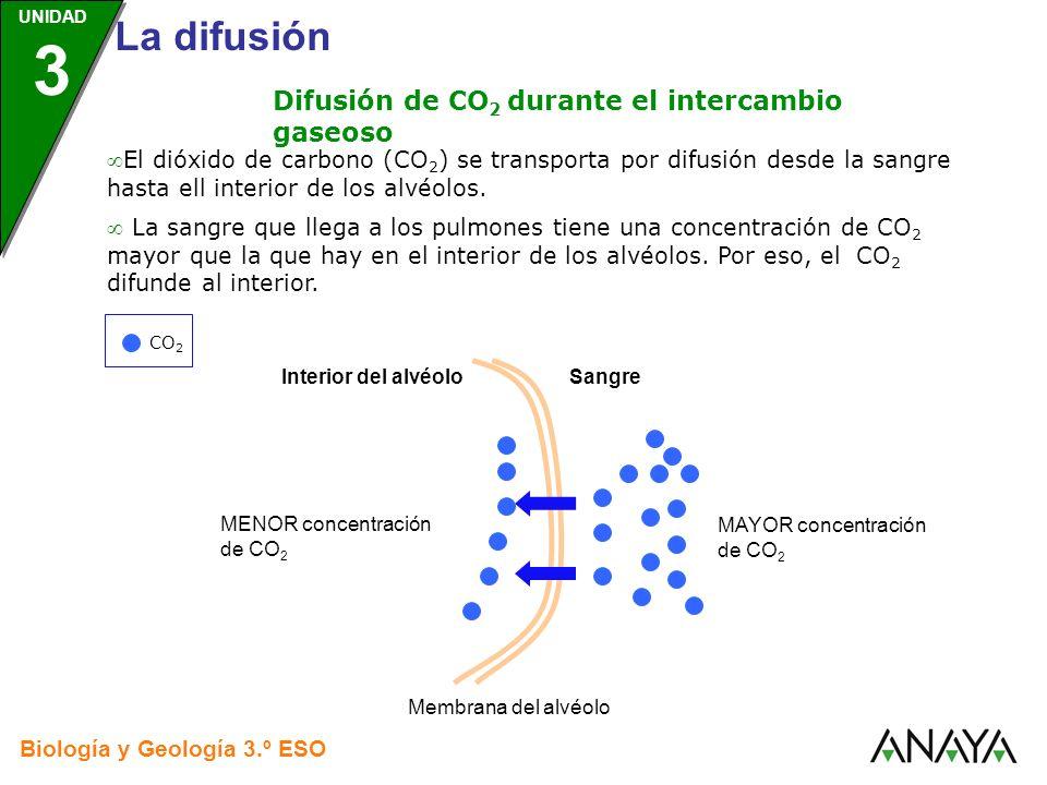 Difusión de CO2 durante el intercambio gaseoso