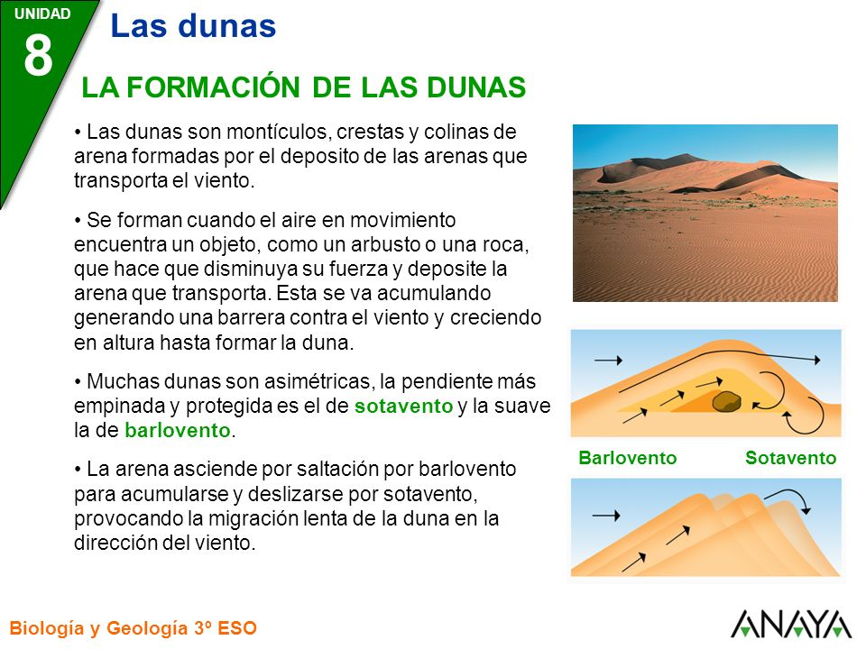 8 Las dunas LA FORMACIÓN DE LAS DUNAS