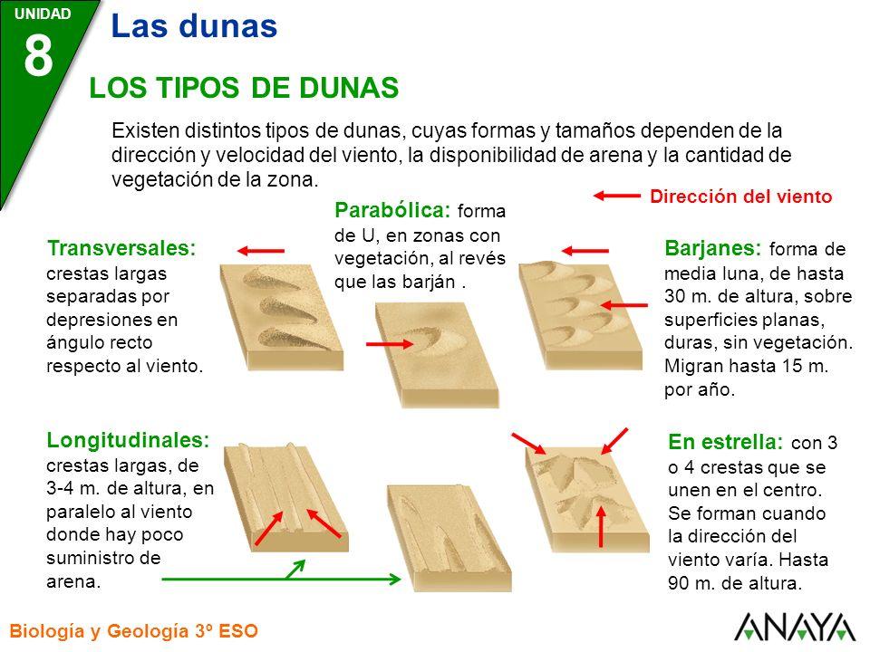 8 Las dunas LOS TIPOS DE DUNAS
