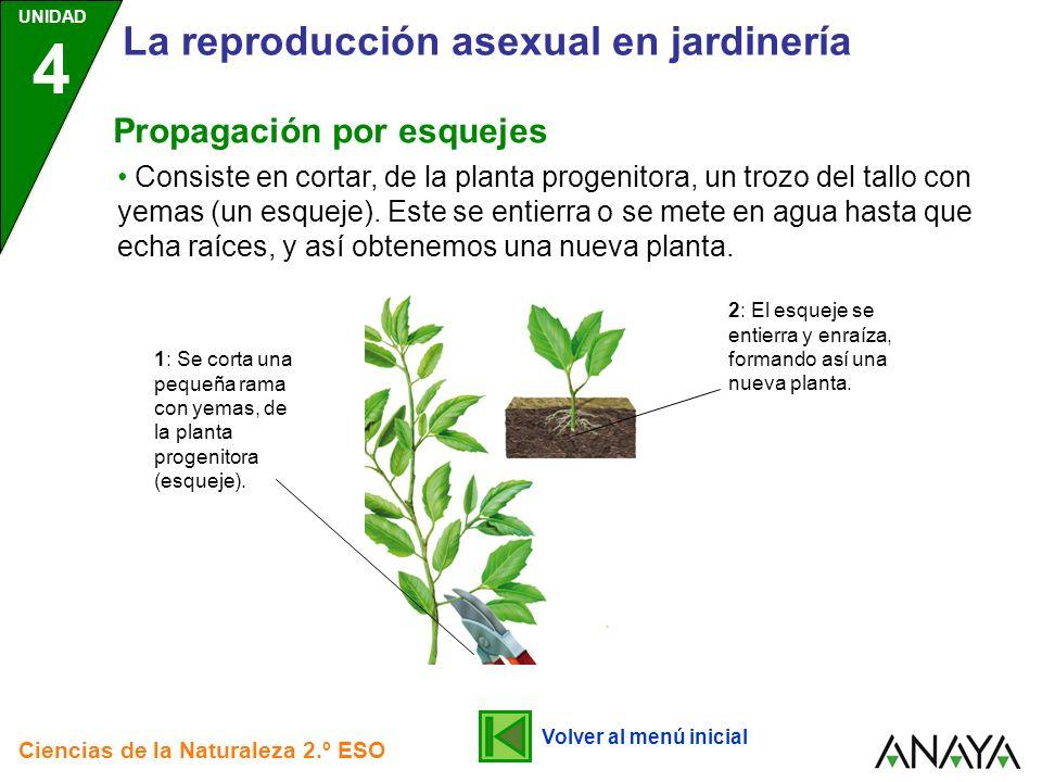 La reproducción asexual en jardinería