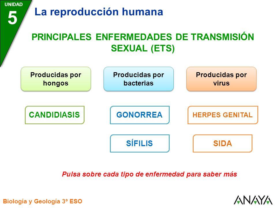 5 La reproducción humana