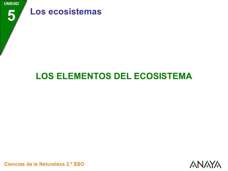 LOS ELEMENTOS DEL ECOSISTEMA