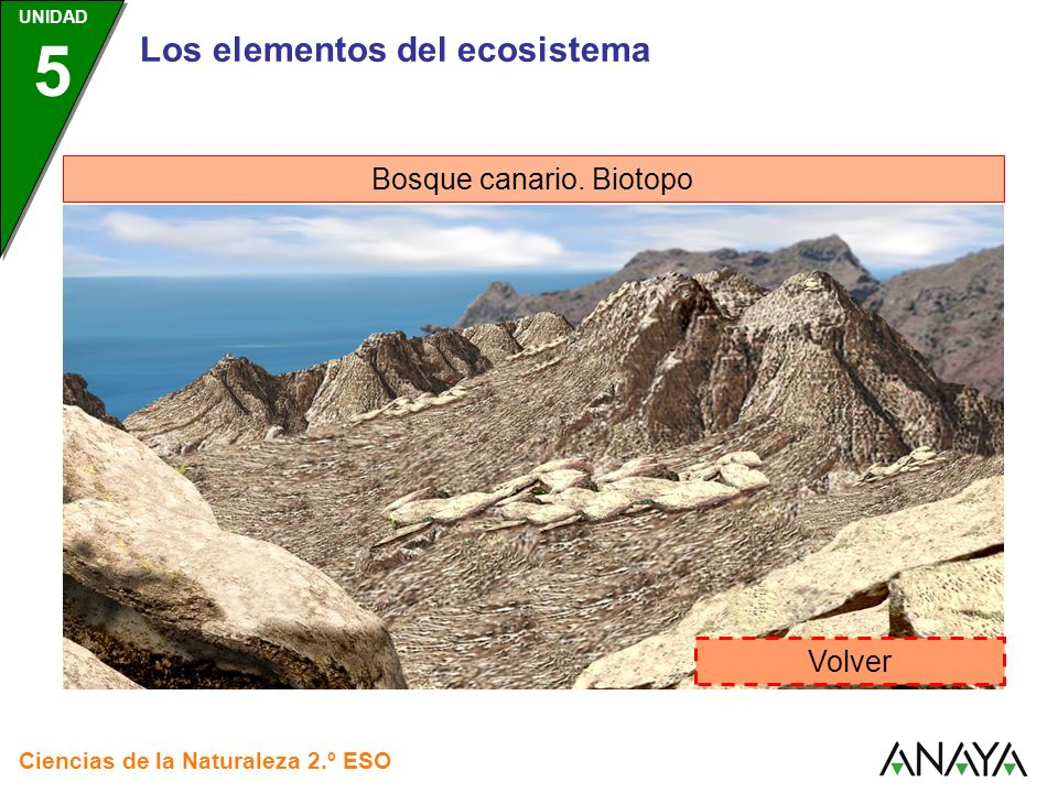 Bosque canario. Biotopo