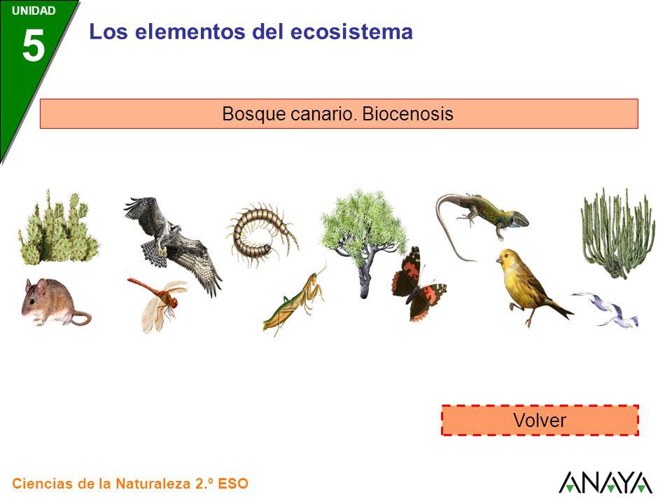 Bosque canario. Biocenosis