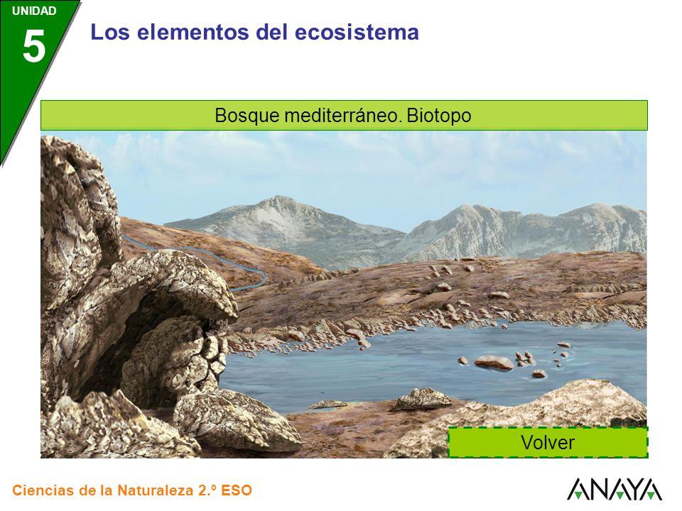 Bosque mediterráneo. Biotopo