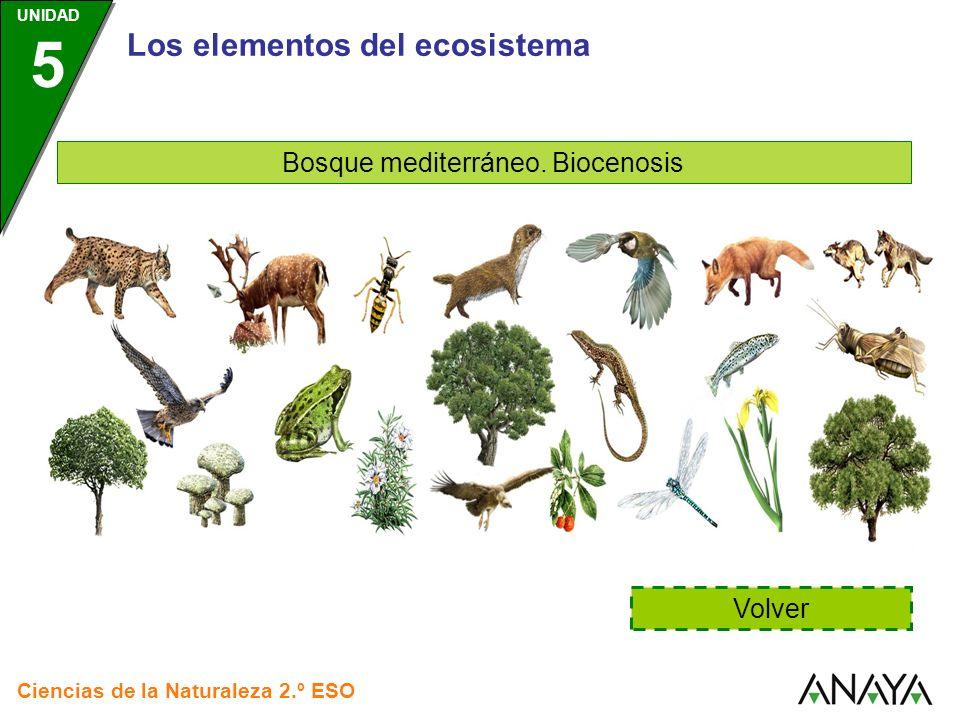 Bosque mediterráneo. Biocenosis