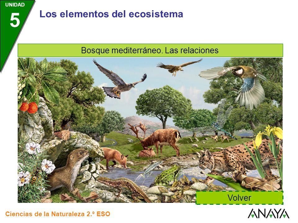 Bosque mediterráneo. Las relaciones
