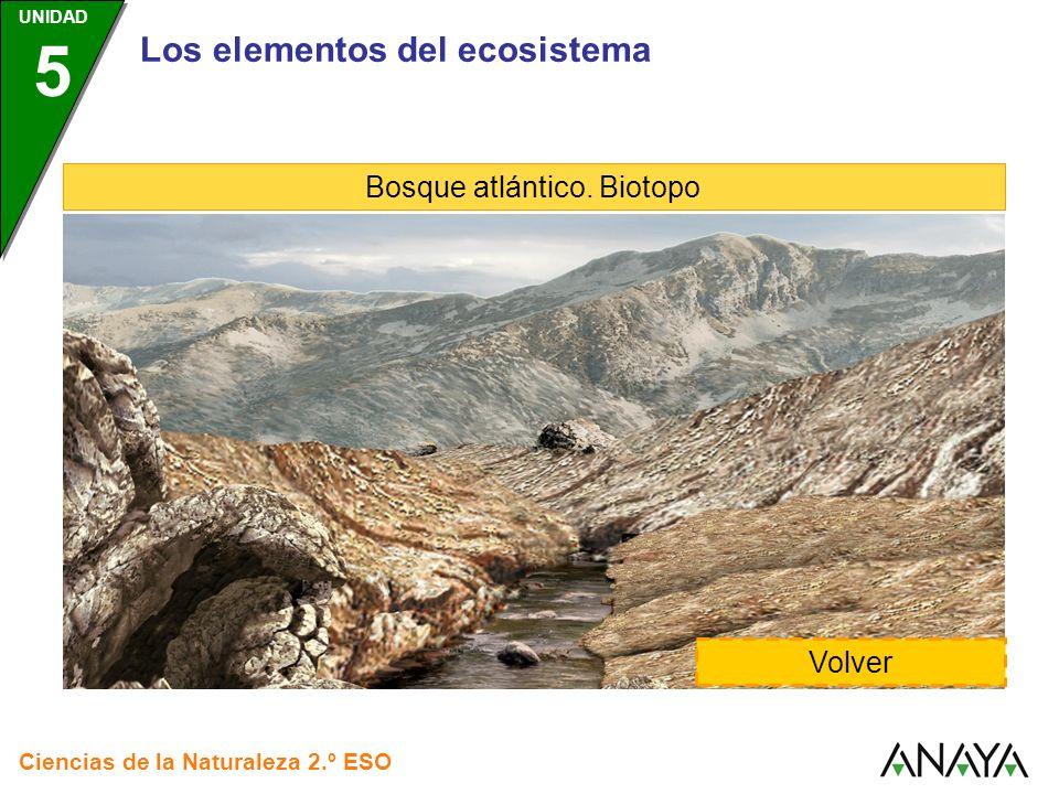 Bosque atlántico. Biotopo