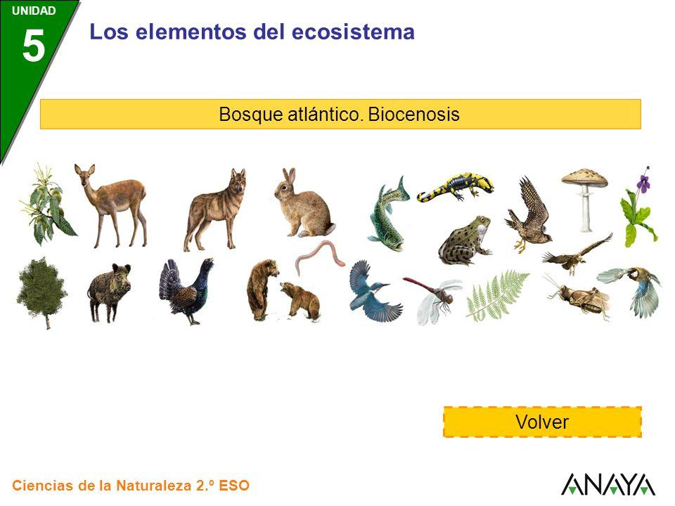 Bosque atlántico. Biocenosis