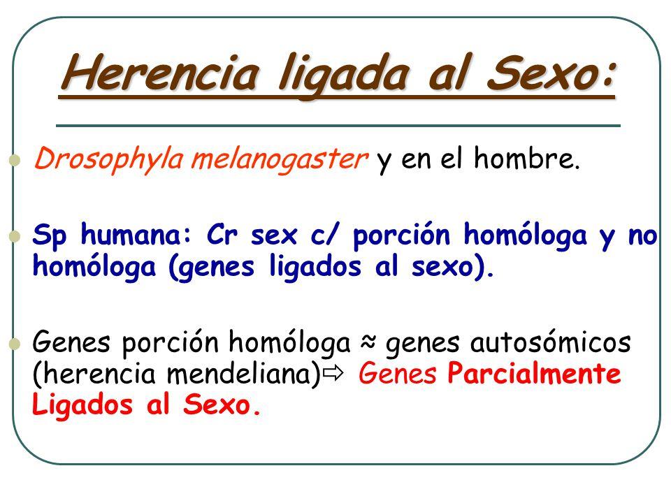 Herencia ligada al cromosoma X recesiva - Genagen