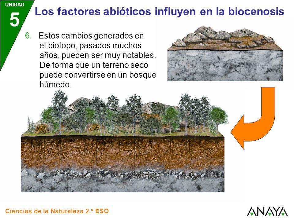 Los factores abióticos influyen en la biocenosis
