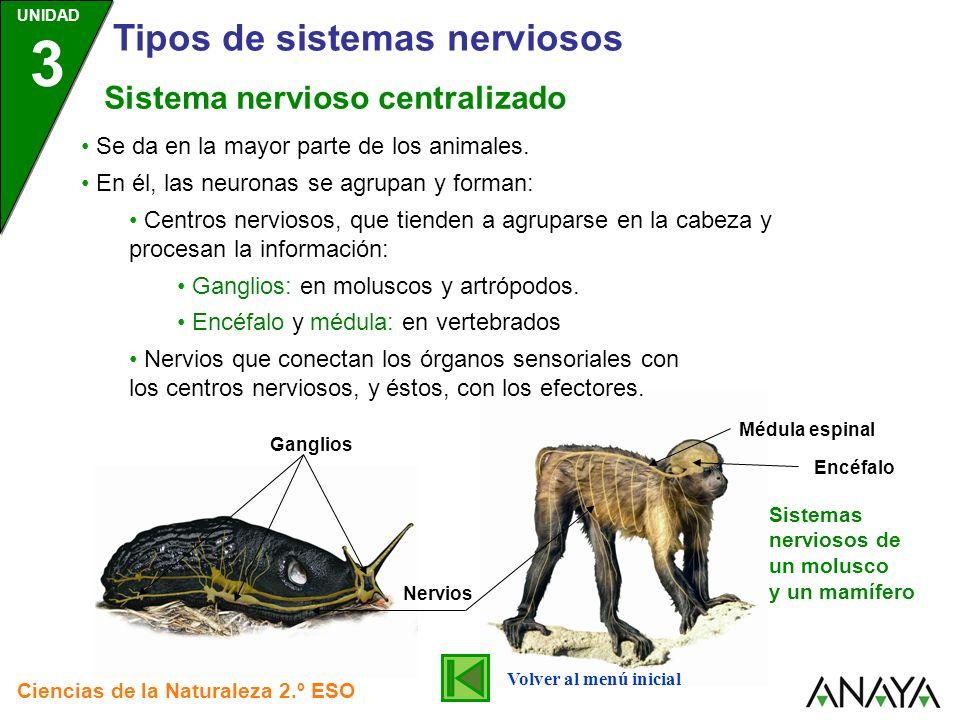 Tipos de sistemas nerviosos
