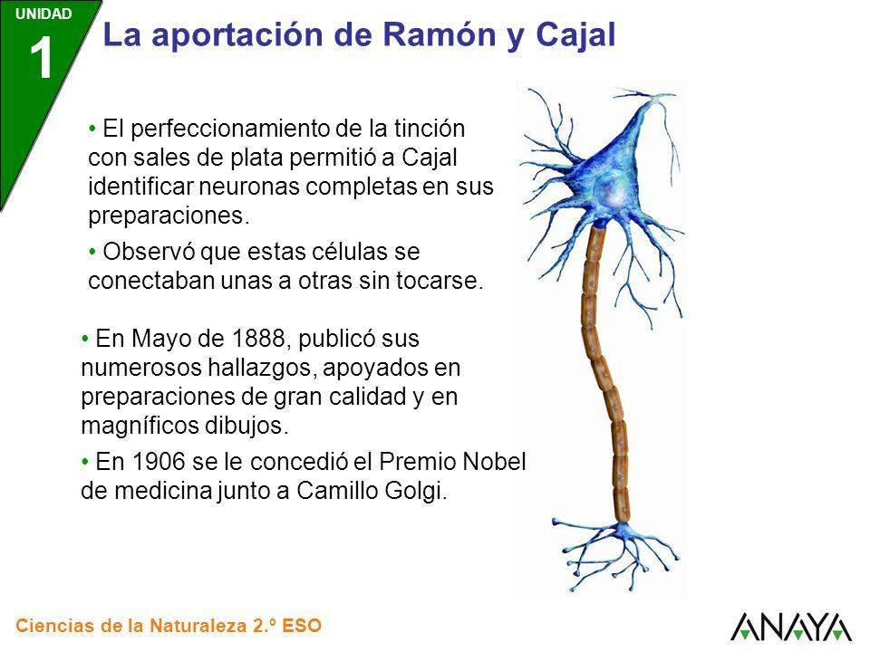 La aportación de Ramón y Cajal