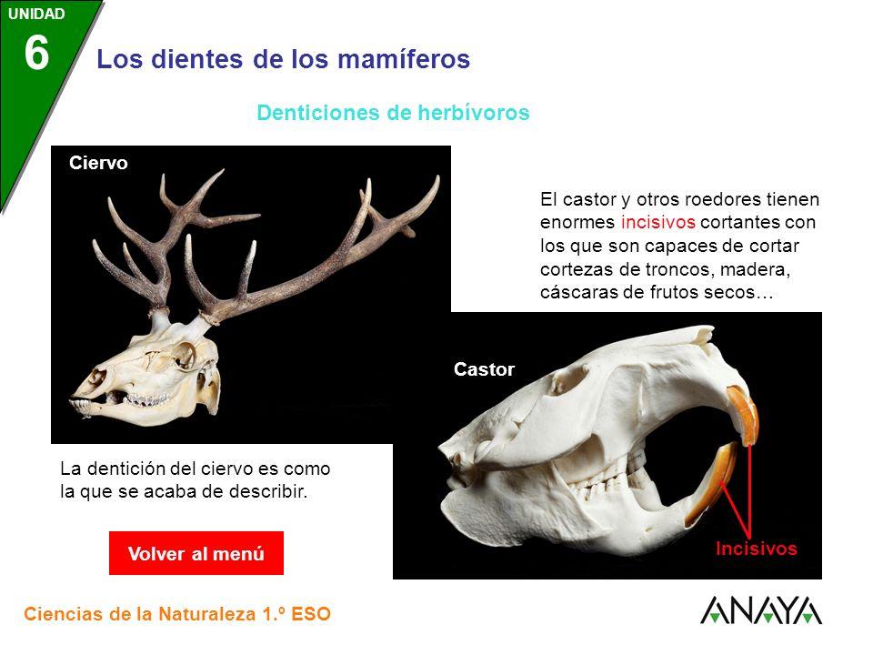 Denticiones de herbívoros